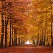 Sand lane with trees in autumn - Stock Photo