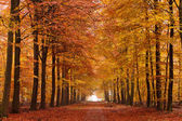 Sand lane with trees in autumn — Stock Photo