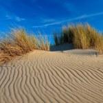 Sand dunes with helmet grass — Stock Photo #7313002