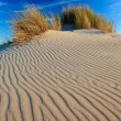 Sand dunes with helmet grass — Stock Photo #7313035