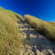 Sand dunes with helmet grass — Stock Photo