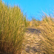 Sand dune with helmet grass — Stock Photo #7313776