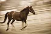 Fast running horse — Stock Photo
