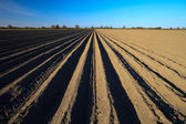 Cultivated potato field in spring time — Stock Photo