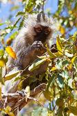 Mladé opice sedící na stromě — Stock fotografie
