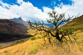 Tree in a mountain landscape — Stock Photo