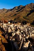 горная деревня, освещенный утренним солнцем — Стоковое фото