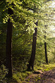 Trees in a forest with backlite — Stock Photo