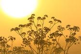 Flower silhouette at sunrise — Stock Photo