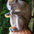 Macaque monkey sitting on a pole — Stock Photo
