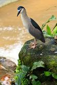 Czapla ptaków z bliska — Zdjęcie stockowe