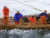 Salmon fishing — Stock Photo