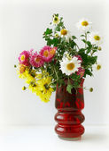 Blommor — Stockfoto
