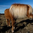 Horse portrait — Stock Photo #7652655