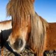 Horse portrait — Stock Photo #7652705