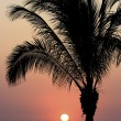 Tropical Mexican Sunset — Stock Photo