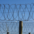 Stock Photo: Prison Barbed Wire