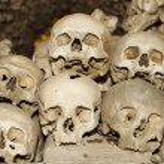 Six Human Skulls — Stock Photo #7358625