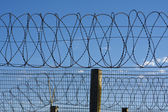 Prison Barbed Wire — Stock Photo