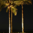 Palm Trees At Night — Stock Photo #7369243
