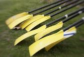 Yellow Oars Before Race — Stock Photo
