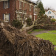 Fallen Tree and House - Foto de Stock  