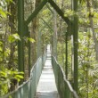 Постер, плакат: Tropical Suspension Bridge