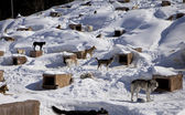 Sled Dog Kennel — Stock Photo