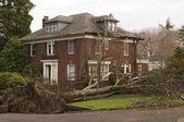 Maison avec dommages aux arbres — Photo