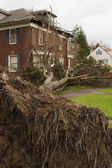 Fallen Tree and House — Stock Photo