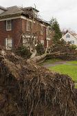 Maison et tronc d'arbre — Photo