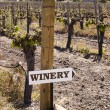 Winery Sign In Vineyard — Stock Photo
