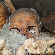 Catacombs Skull — Stock Photo