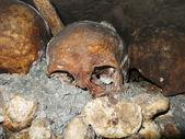 Catacombs Skull — Stock Photo