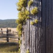 Fence Post With Moss — Stock Photo
