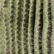 Royalty-Free Stock Photo: Cactus Spine Pattern