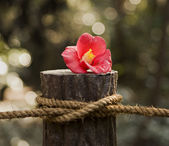 Red Flower On Post With Rope — Stock Photo
