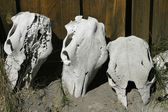 Three Skulls — Stock Photo