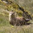 Wild River Otter — Stock Photo #7570801