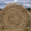 Hay Roll On A Farm — Stock Photo