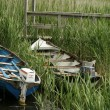 Two Boats In Reeds - Stock Photo