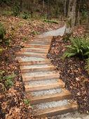 Nuevos pasos en parque — Foto de Stock