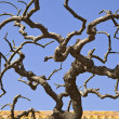 Stock Photo: Twisted Tree Branches