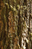 Tree Bark With Moss, Vertical — Stock Photo