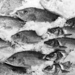 ������, ������: School Of Fish On Ice