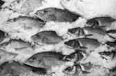 Escola de peixe no gelo — Fotografia Stock
