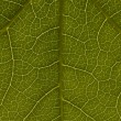 Stock Photo: Green Leaf Pattern