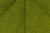 Green Leaf Pattern — Stock Photo