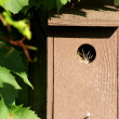 Birdhouse With New Tenants — Stock Photo