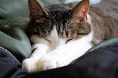 Cat Nap — Stock Photo